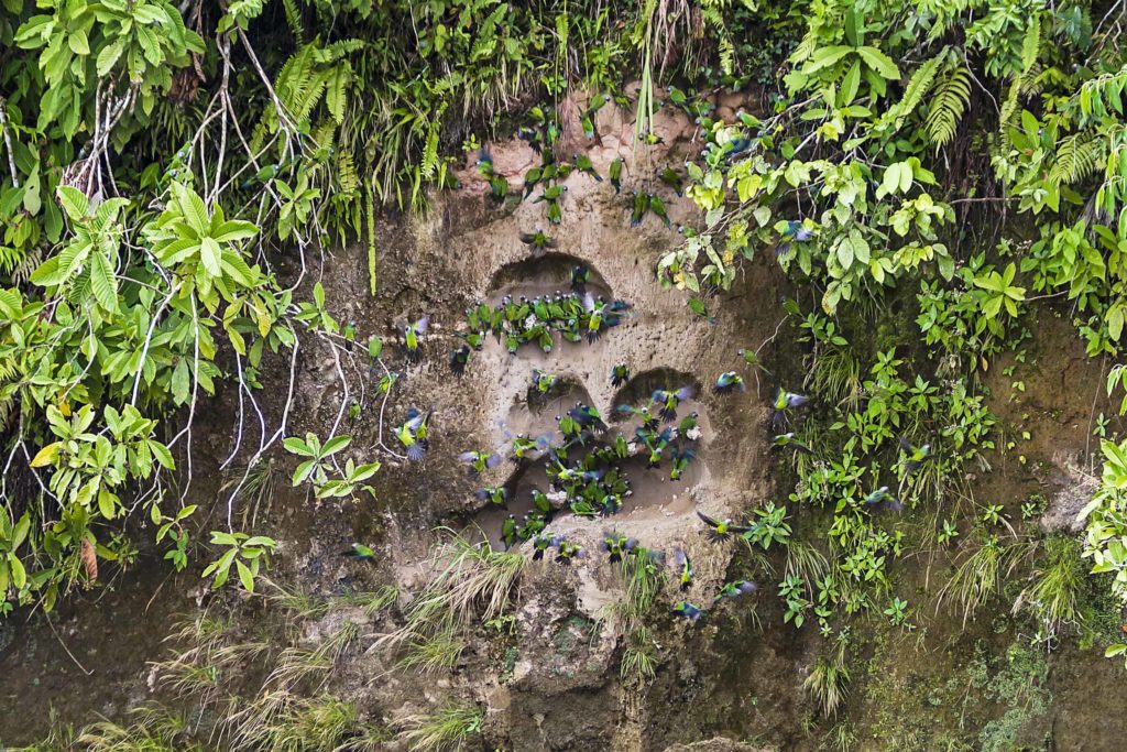 Amazonia Casa del Suizo Parque Nacional Yasuní 17