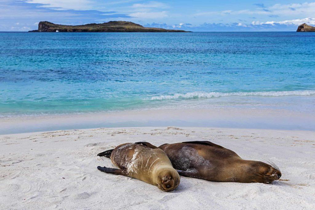 Islas Galapagos Bahía Gardner 02