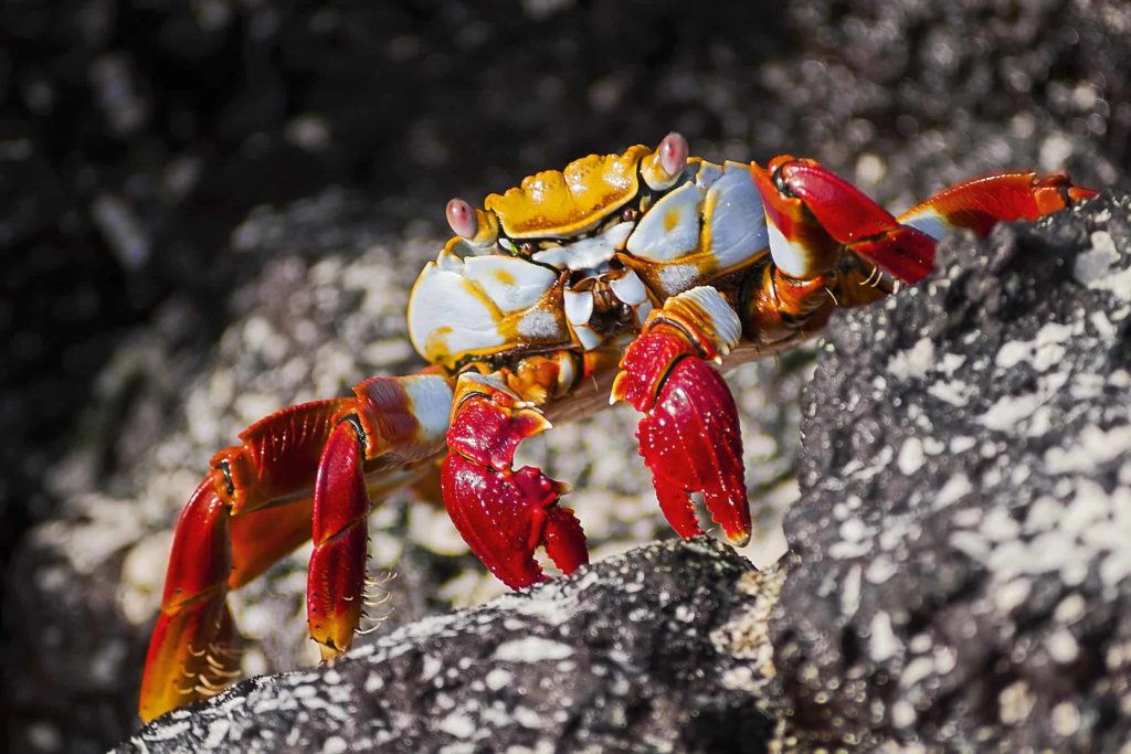 Islas Galapagos Playa Las Bachas 21