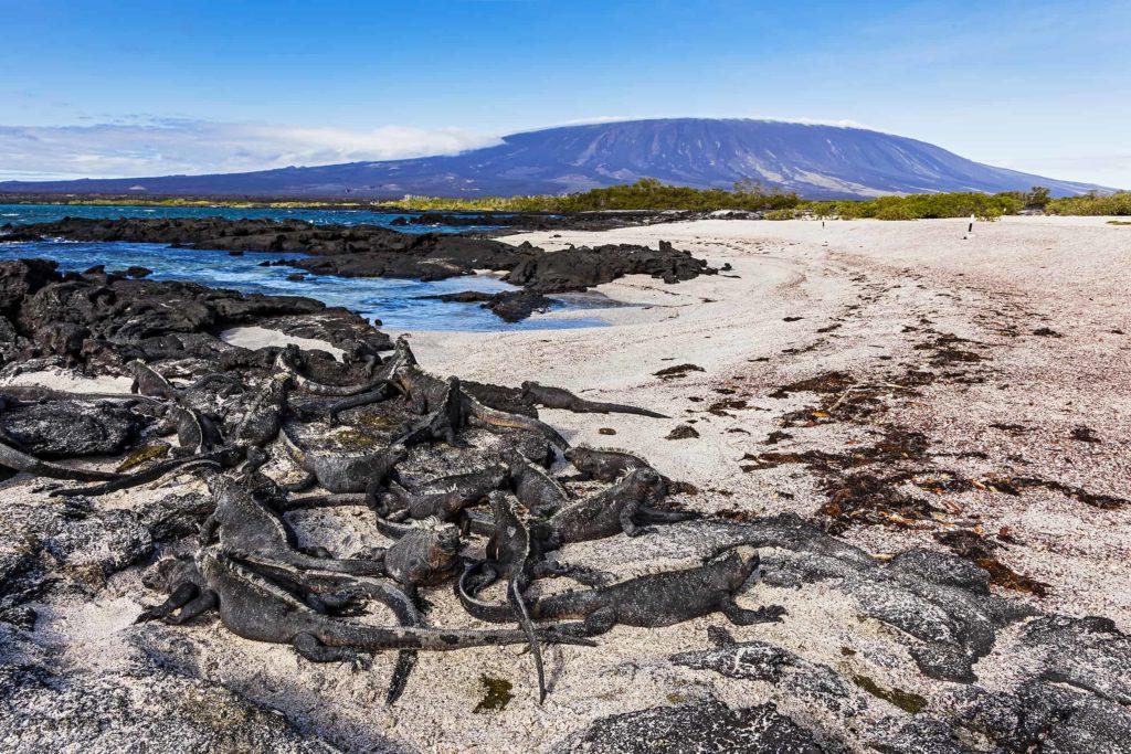 Islas Galapagos Punta Espinoza 16