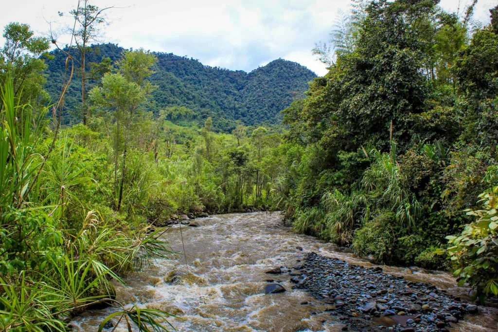 Mindo river
